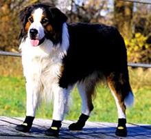 Pfotenschutz-Schuhe